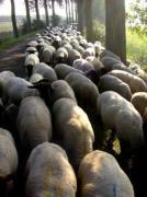 Gedifferentieerde avb voor veeartsen