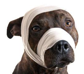Veel huisdiereigenaren kiezen voor vrijwillig eigen risico