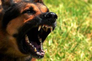 Whiplash-jurisprudentie is niet van toepassing bij een hondenbeet