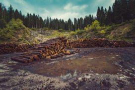 Verzekeraars sluiten ogen voor ontbossing en landroof : Vivat zet zich wel goed in