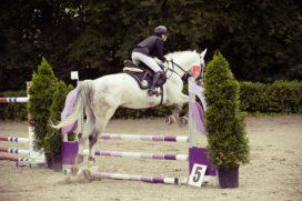 Unirobe Meeus Groep maakt sprong naar paardensport