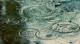 Dirkzwager kringen water 80x44