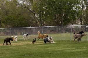 Botsing met een hond; bezitter aansprakelijk op grond van artikel 6:179 BW