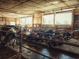 ASR wil dat boeren sneller asbest saneren tegen hogere premie