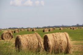 Movir versoepelt acceptatiebeleid voor boeren