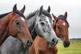 Paardenverzekeraars en reisbureaus verliezen Wft-vrijstelling